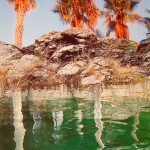 Orange Palms