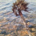 Palm Log