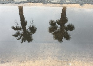 Twin palms in Reflection
